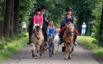 Veel plezier met de pony's op onze camping